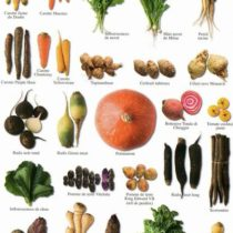 nouvelles Images Root Vegetable Multiple Atelier Postcard